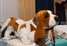 Tierheilpraktikertage 2011